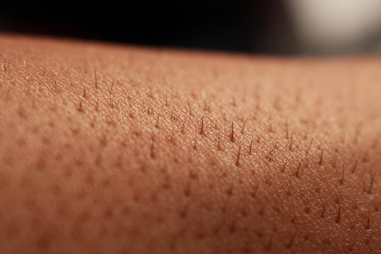 Ausscheidungsorgan Haut