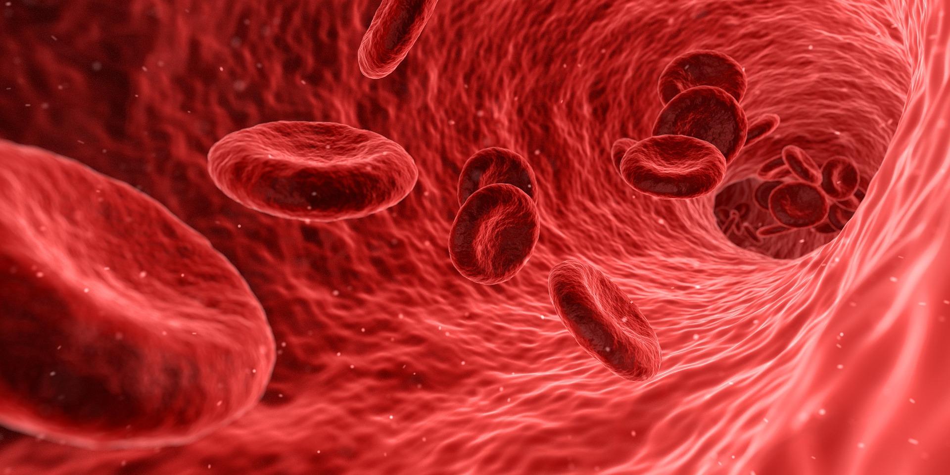 Bedeutung der Nieren im Säure-Basen-Haushalt