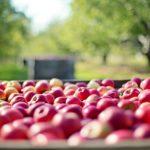 Bedeutung von Antioxidantien