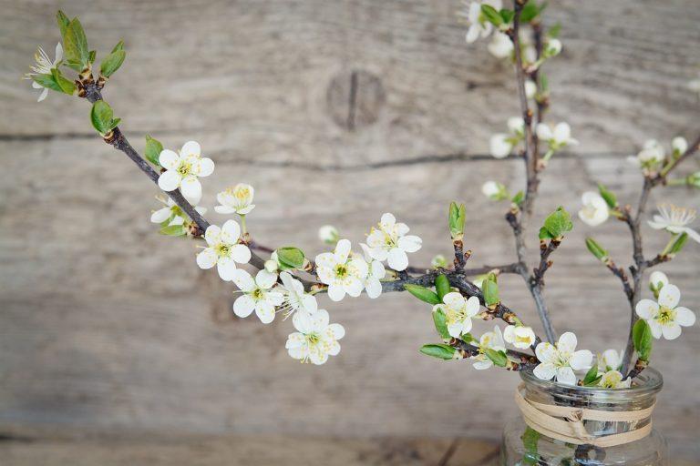 Basisch durch den Frühling